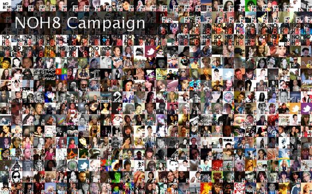 NOH8 Campaign  Twibute 500