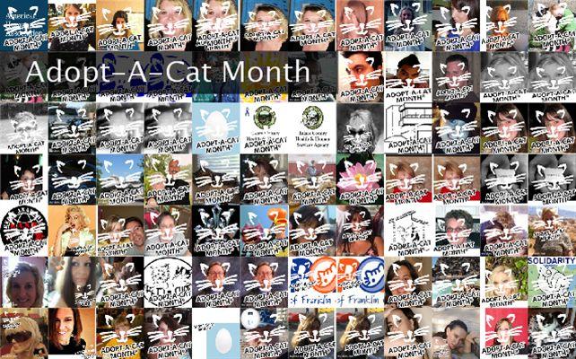 Adopt-A-Cat Month Twibute 100