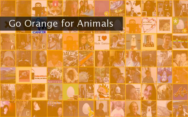 Go Orange for Animals  Twibute 100