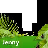 Jenny to win