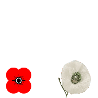 Poppy Red/Poppy White