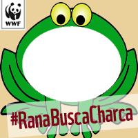 #RanaBuscaCharca