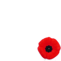 Canadian Poppy Campaign